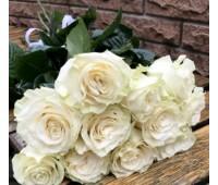 Голландская роза белая